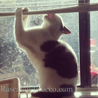 Rascal and Rocco- Cat's Mishaps Bring Cheer to a Heavy Heart