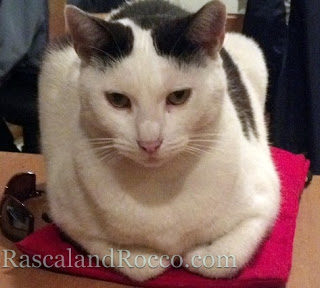 Rascal and Rocco- Cat Etiquette: Lessons in Table Manners