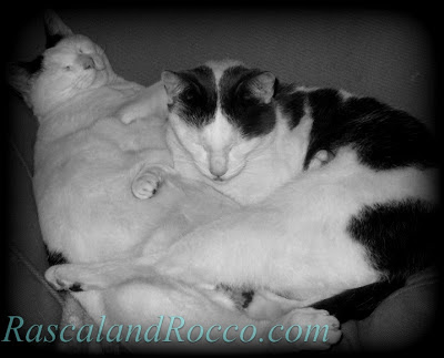Rascal and Rocco: Best Cat Blog Award