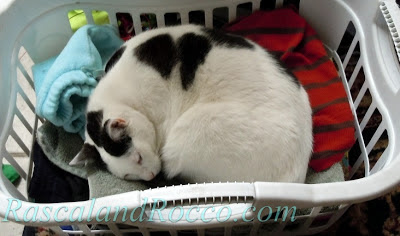 Rascal and Rocco- Lurking Laundry Basket- When Laundry Strikes back