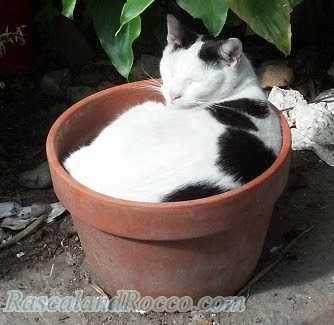 Grow a Cat from a Pot