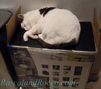 Rascal and Rocco: Cat Napping on a Box