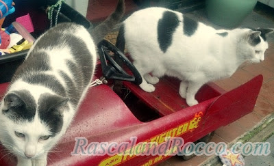 Rascal and Rocco- How to Create a Cat's Garden