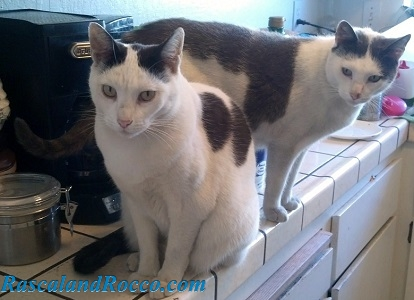 Rascal and Rocco- I Live to Feed Cats