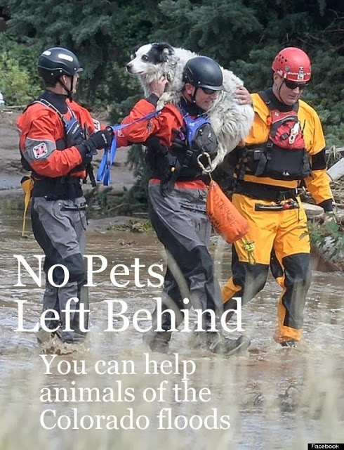 Monday Matters- Pets in Colorado Flooding