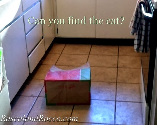 Wordless Wednesday: Find the Cat