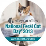 Monday Matters- Why Help Feral Cats?