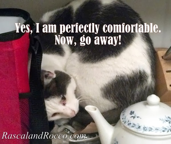 Stuck Cat or Creatively Comfortable?