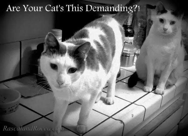 Are your Pets this Obnoxious in the Morning? A Cat's Menu, Plus a Cat Food Gift Basket Giveaway #HillsPet