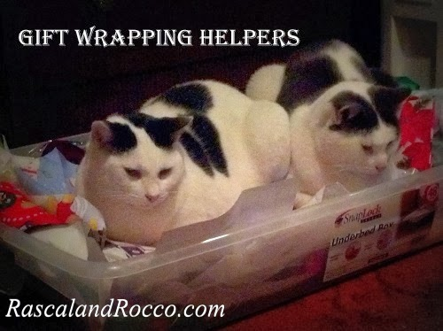 Rascal and Rocco- Cats Help Prepare for the Holidays