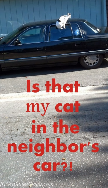 Is that my cat in the neighbors car? Wanted Cat on the Run!