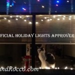 Cats Help Prepare for the Holidays