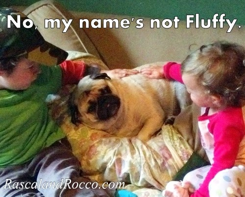 "Is Your Pet Excessively ""Fluffy""? #HillsPet"