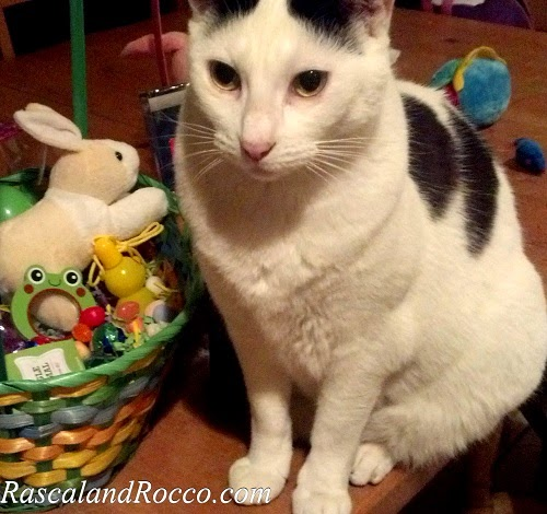 The #bunny better not be touching me. #Cats #Easter #Baskets