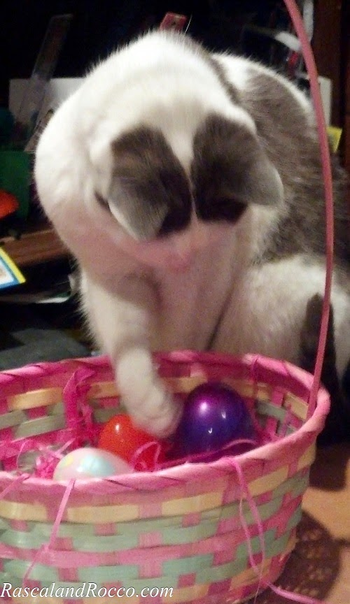 My #Egg! #Cats #Easter #Baskets