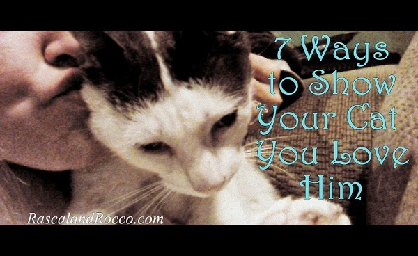 7 Ways to Show Your Cat You Love Him #HillsPet