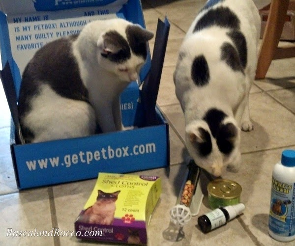 Petbox review #cats #cattreats #pets #gifts