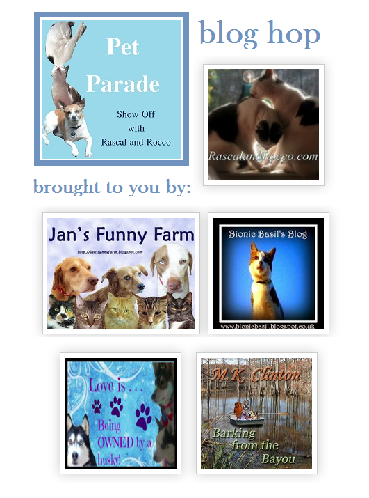 Pet Parade #Pawty & Big #Giveaway for #animallovers #Win #gifts for #cats & #dogs lovers