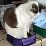 Cat Helps with Kids Lunch