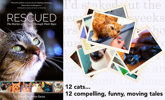 #CatRescue Anthology Release #AnimalCharity Campaign #catlover #cats #goodreads