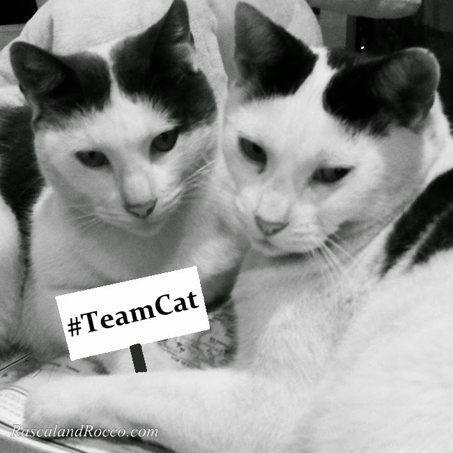 Are you #TeamCat or #TeamDog? #theLucyBowl
