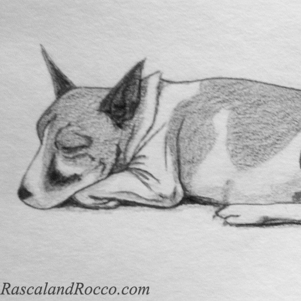 small terrier mix dog drawing by L.E. Mastilock