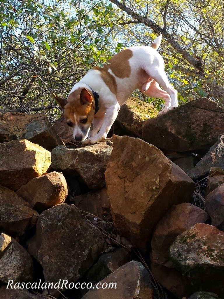 Does Your Dog Know His Inner Wild? #TheArtofNutrition #dogs #naturalpetfood #dogfood #grainfree