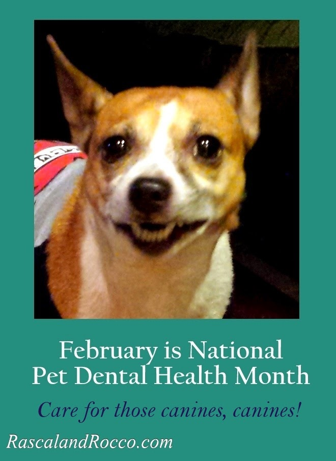 February is Pet Dental Health Month #doghealth #doglover #pets