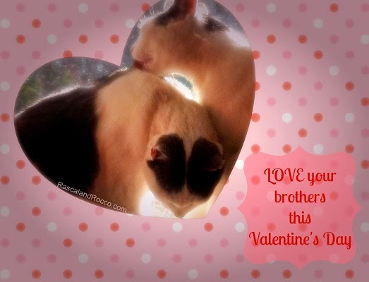 Kitty cat love on Valentines day