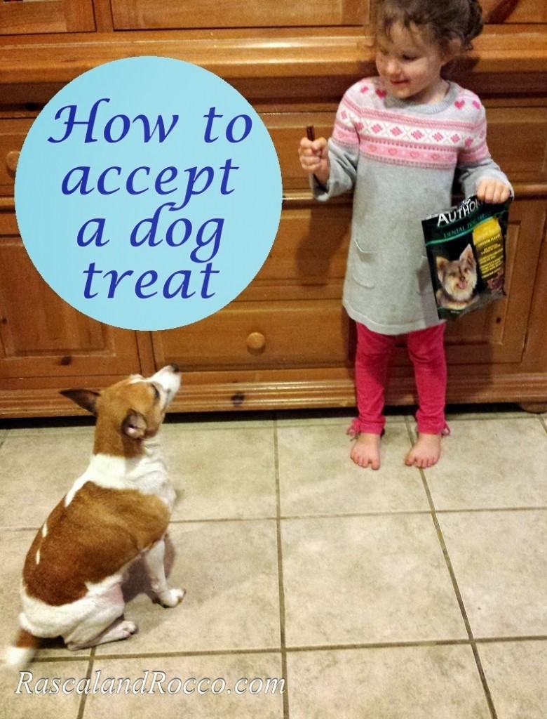 How to Accept a Dog Treat #Rascalandrocco #dogdentalhealth #pets #dogtraining #dogtreats