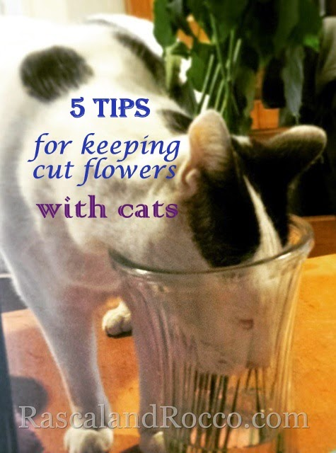 5 Tips for Cut Flowers with #Cats #spring #flowers #pets #pethealth