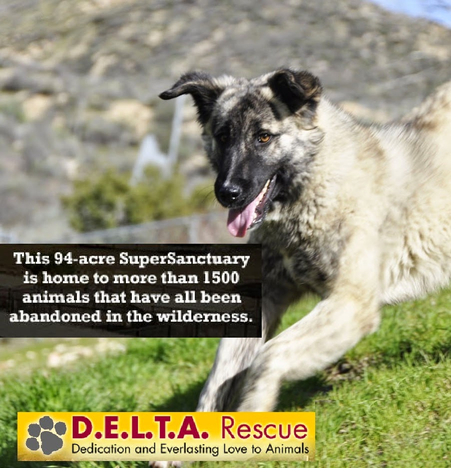 DELTA Rescue Super Animal Sanctuary 35th Anniversary #mondaymatters