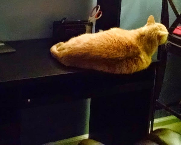Orange Tabby Cat on desk #petparade #petbloggers #cats #catlover #orangetabby