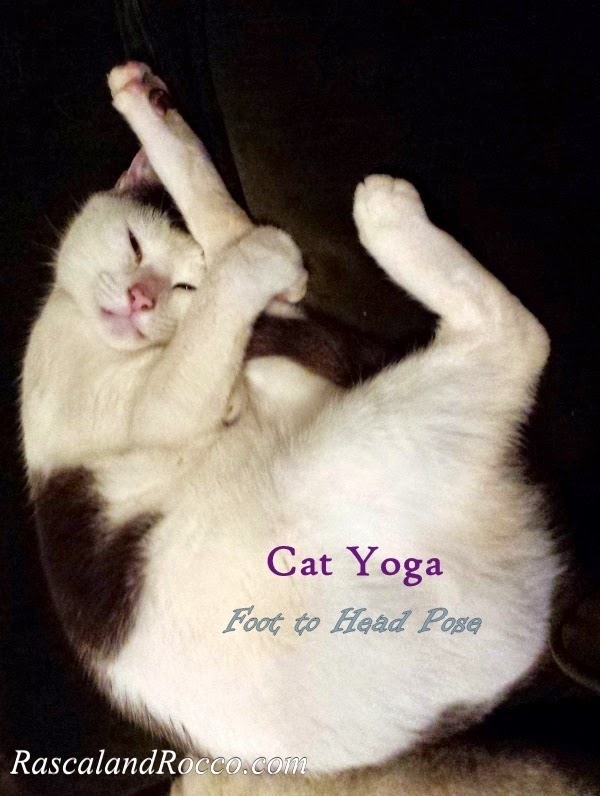 Healthy Lifestyle Tips of a Yogi Cat #PawNatural