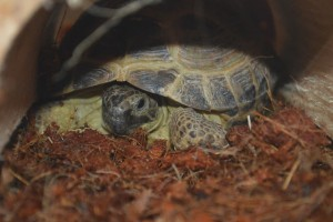 Join in the Pet Parade with Fred the tortoise for all pets and animal lovers and pet bloggers