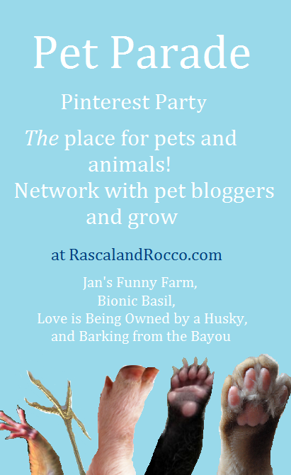 Pet Parade blog hop for pet bloggers and animal lovers of all kinds. Cats, dogs, birds, reptiles, all animals welcome. Grow your pet blog and enjoy some furry fun