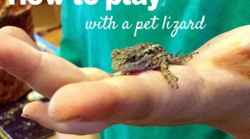 How to Play with a Lizard #ReptileCare
