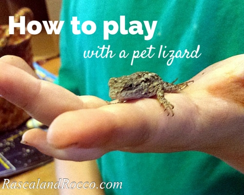 this boy has tons of fun with his pet lizard #reptilecare #pets #lizard #reptile