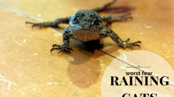 Do Lizards Have Fears? #ReptileCare