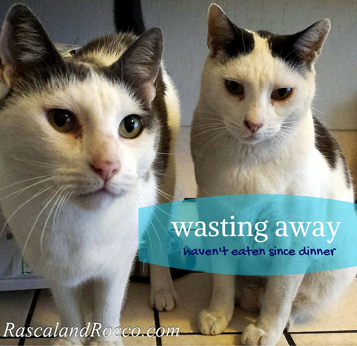 These are some hungry cats! Did I feed them in time? @NaturalBalance pet food is now at @PetSmart! Watch our #PetSmartStory on video