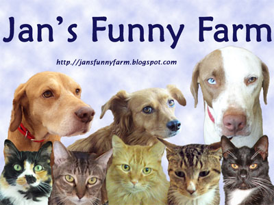 funny dogs and cats at Jans Funny Farm