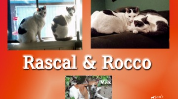 Rascal and Rocco Exclusive Interview