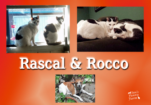 Cats called Rascal and Rocco.