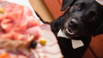 6 Thanksgiving Food Dangers for Pets