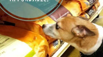 Natural Pet Food is Affordable #NaturesRecipe