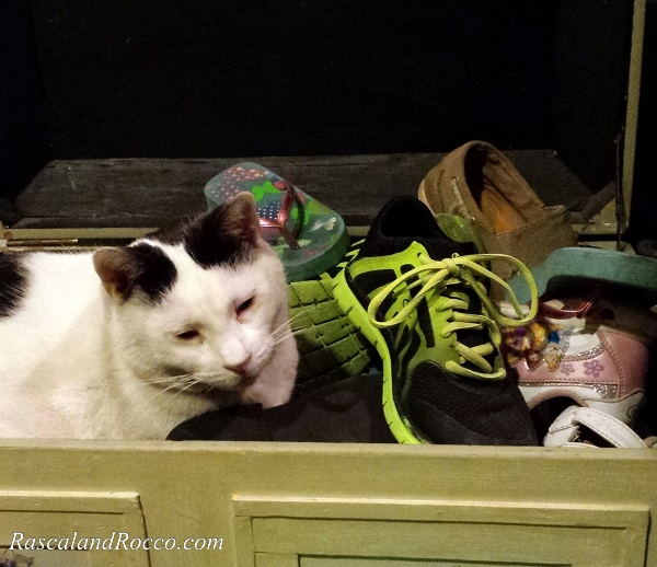 Finding the perfect shoes to wear to match your outfit is not always easy #NaturesRecipe @NaturesRecipe @PetSmart #ad
