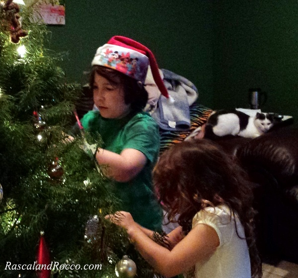 Its important to have a professional kitty cat supervise all holiday decorations #NaturesRecipe @NaturesRecipe @PetSmart #ad