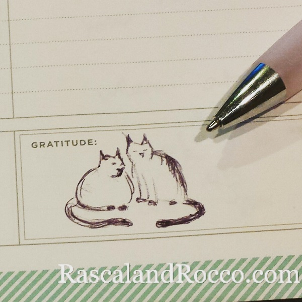This doodle of my cats belonged right there in the gratitude box of my planner