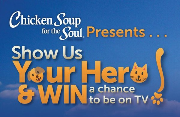 Is your pet a hero? Chicken Soup for the Soul for pets wants to find hidden heroes. Submit your pet video or story to enter the #MyPetIsMyHero contest @ChickenSoupPets | cats | dogs |cat food | dog food