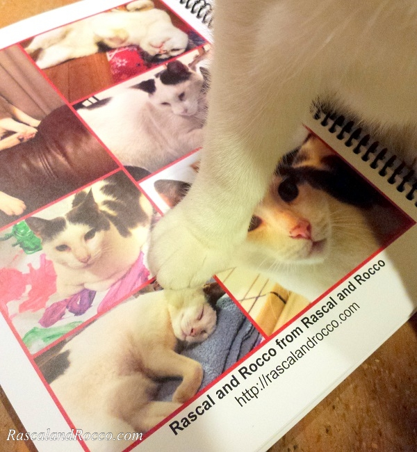 Cats of 2016 Calendar is the favorite weekly planner for animal lovers and kitty cats. Get organized for success this year.